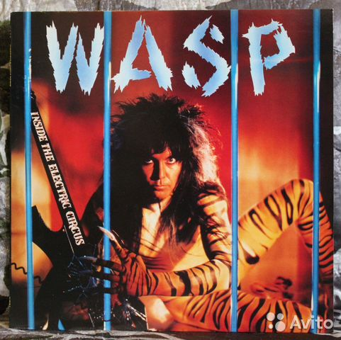 Wasp, wasp - animal (i f