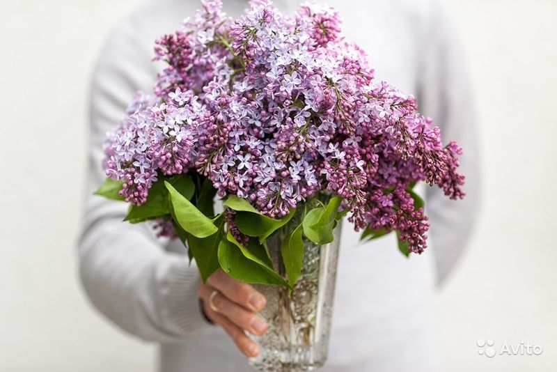 Спб сирень букет купить, цветов
