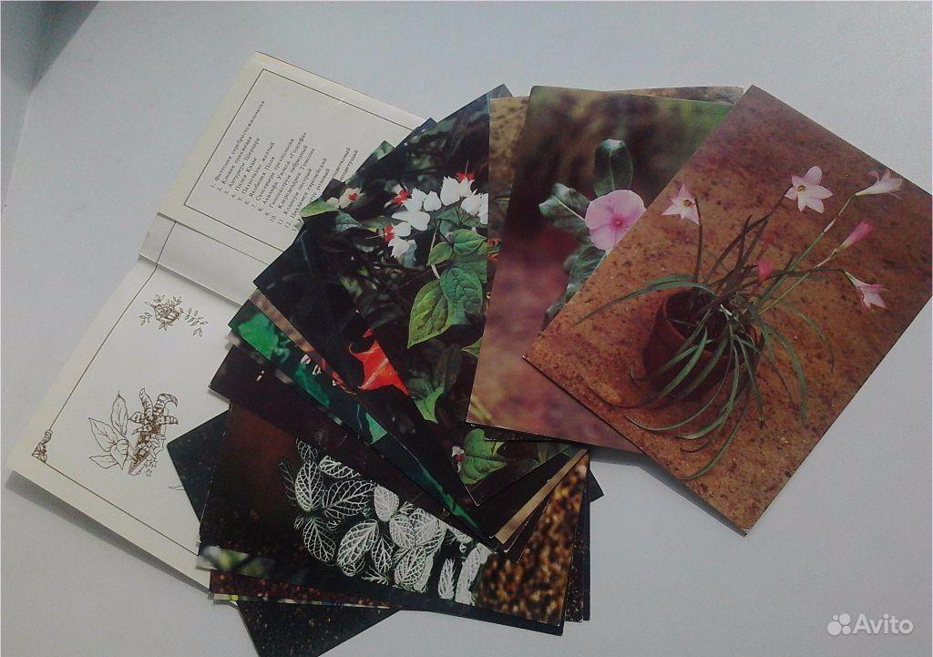 набор открыток декоративные комнатные растения
