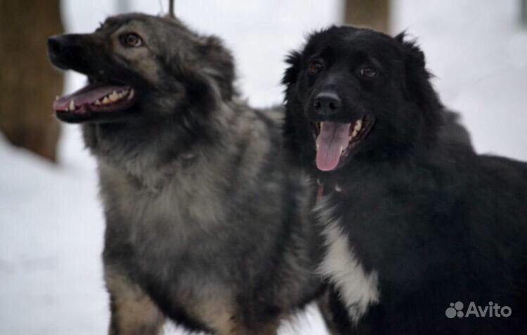 Собака в добрые руки в Москве - фотография № 2