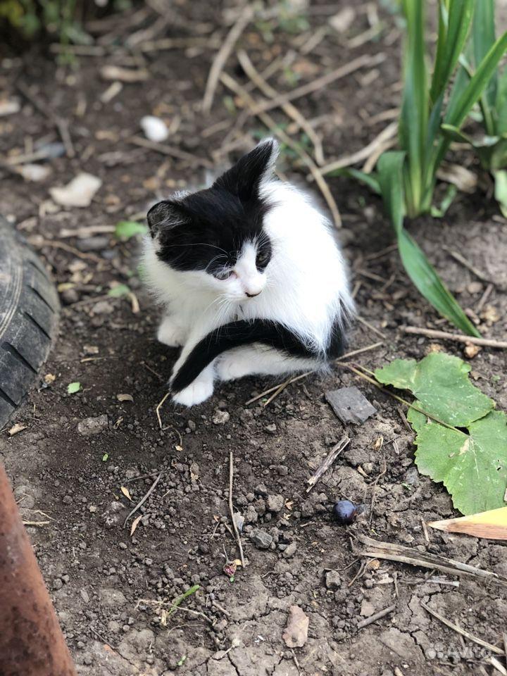 Котята милые бесплатно