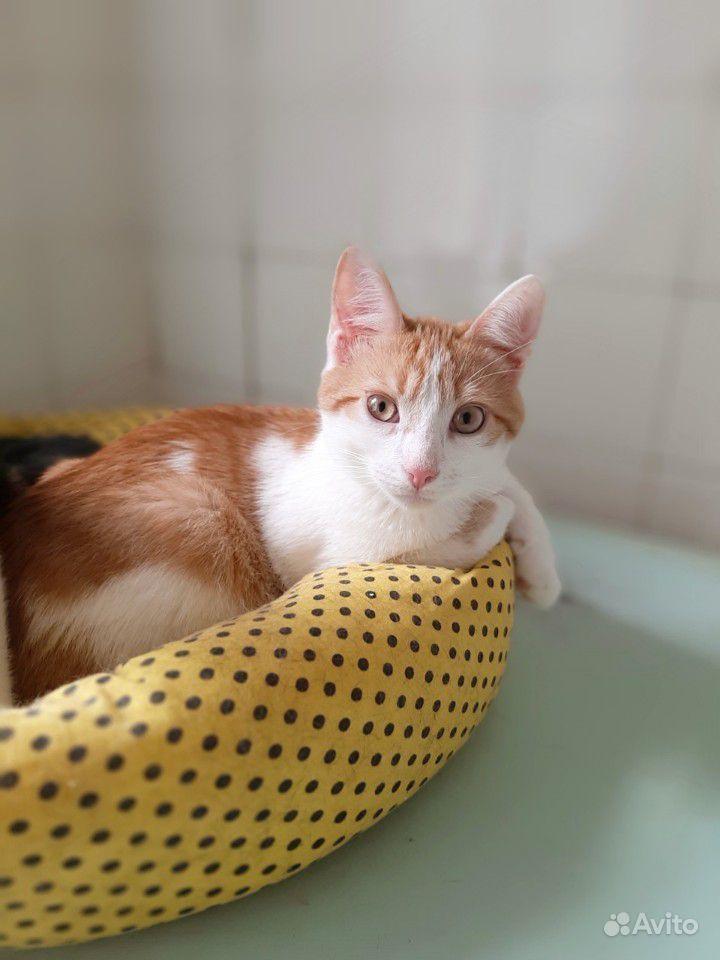 Котёнок - фотография № 3