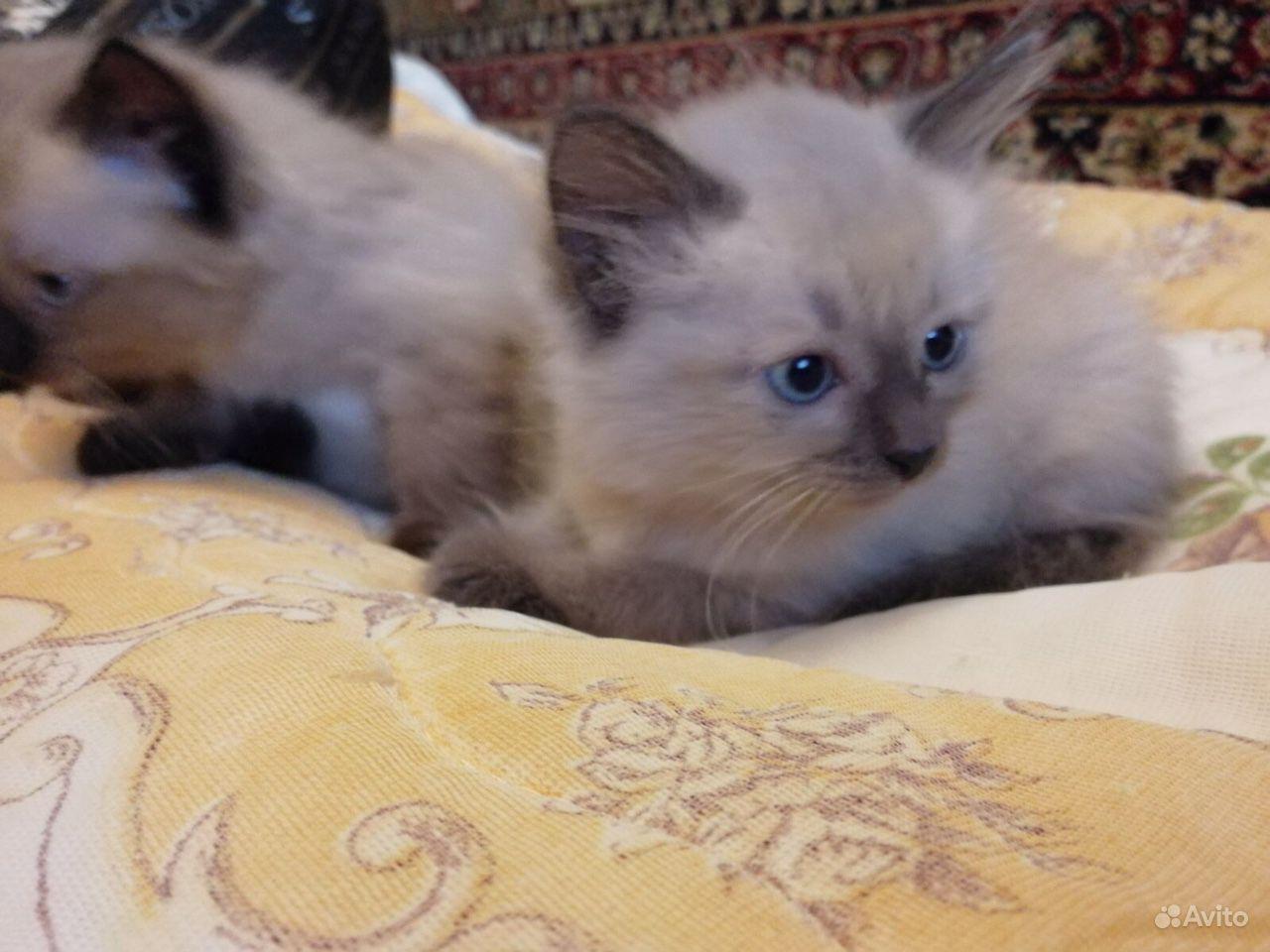 Котята - фотография № 7