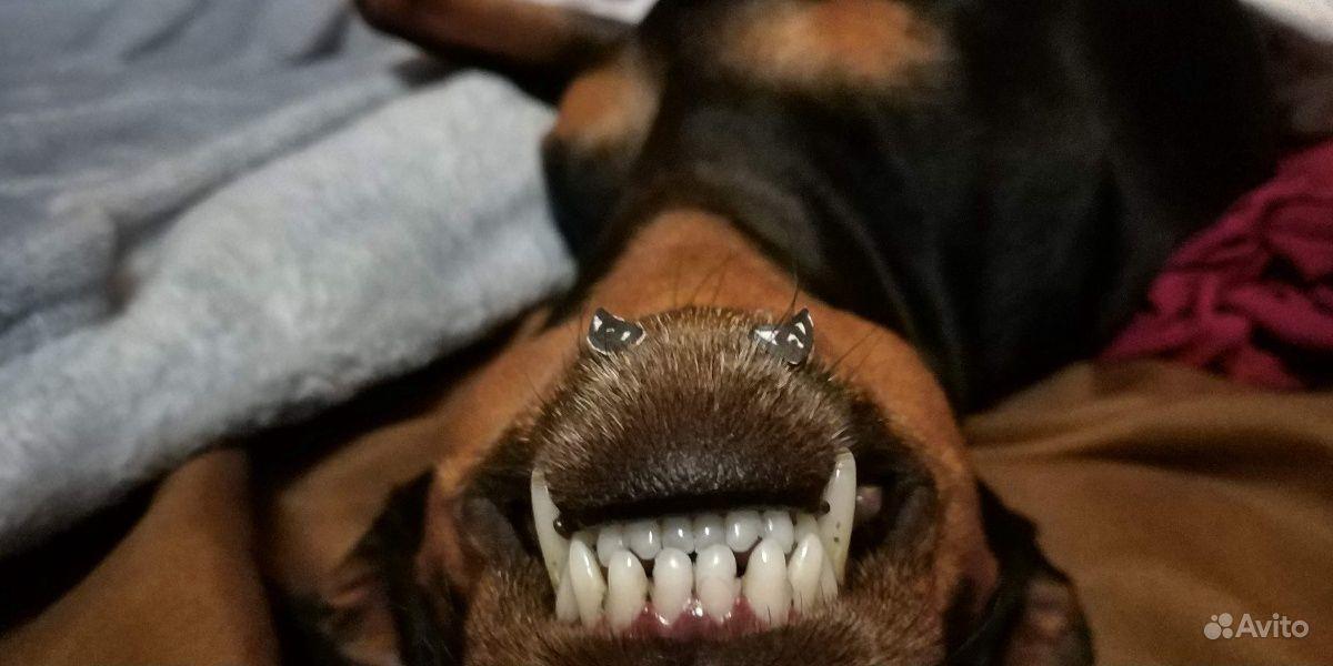 Ультразвуковая чистка зубов собакам купить на Вуёк.ру - фотография № 5