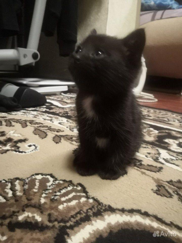 увлекался отдам котеночка в добрые руки картинка купить огнетушитель