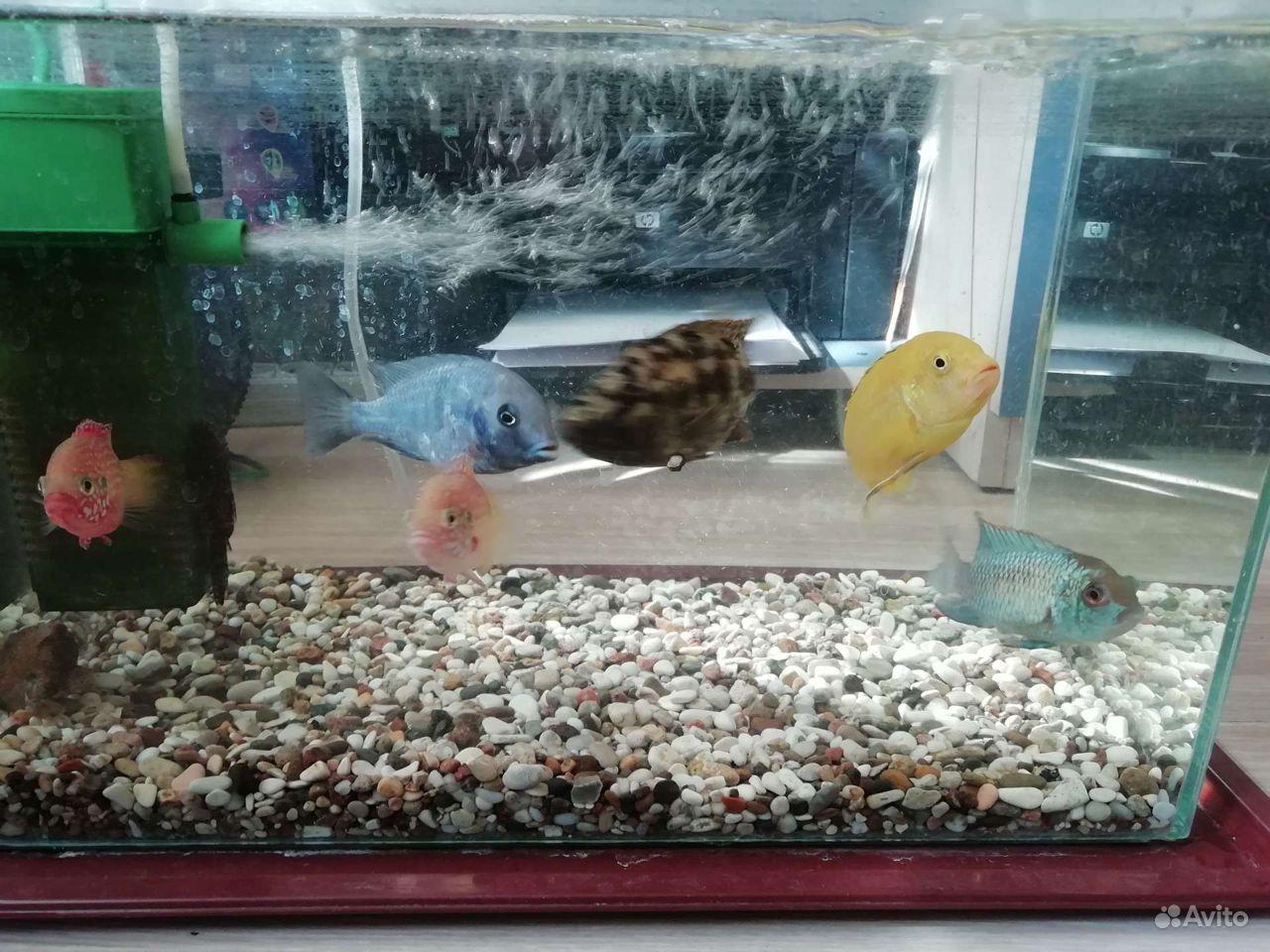 Рыбки купить на Зозу.ру - фотография № 5