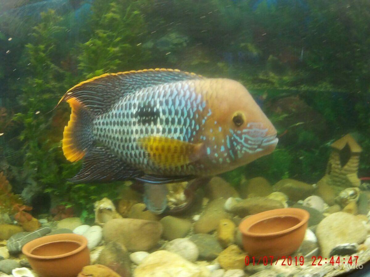Аквариум рыбки продать купить на Зозу.ру - фотография № 2