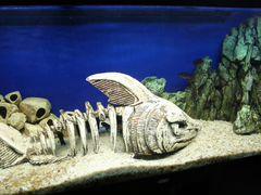 Декорация аквариум скелет акула