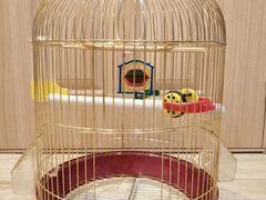 Клетка для волнистого попугая с игрушками