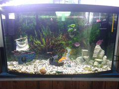 Работающий аквариум 60 литров под ключ