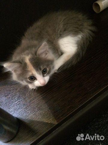 этой статье котята в добрые руки в узловой на авито ткани предпочтительнее