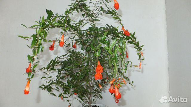 Цветок мирт купить в новочеркасске пенообразователь для тушения пожаров г.новочеркасск купить