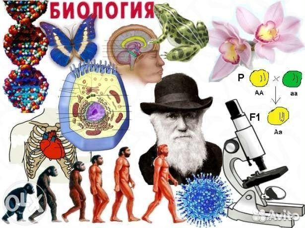 Учим биологию в картинках