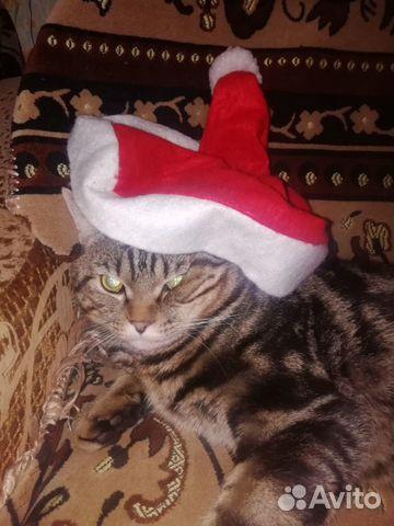 Кот ищет кошечку 89836055840 купить 2