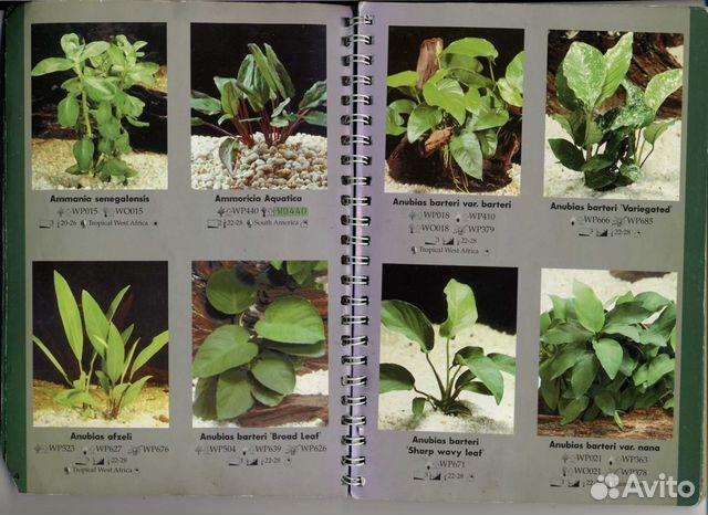 виды аквариумных растений с фото и названиями простота