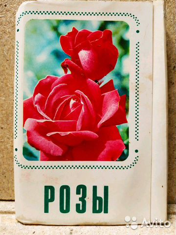 берег оптовые открытки в самаре зрительно укорачивают шею