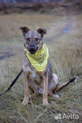 Пёс Смайлик в добрые руки купить на Зозу.ру - фотография № 3