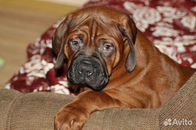 Ми Кюн Доса(Великая собака красоты) (Корейский мас купить на Зозу.ру - фотография № 7