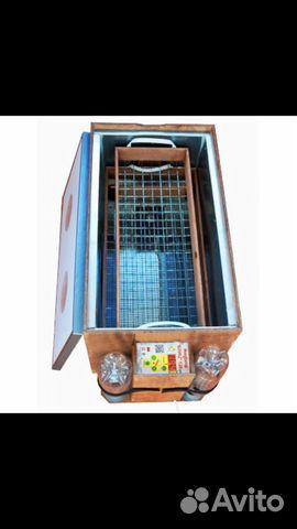 Incubator Blitz 120 C 89226533825 buy 3