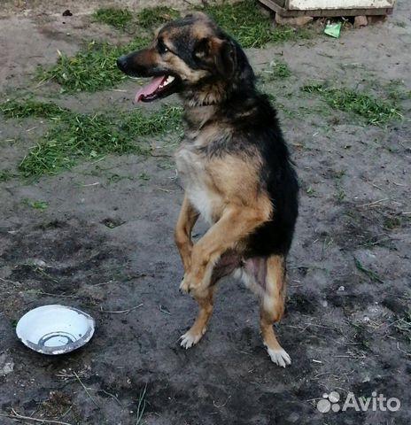 Дара, собака-позитив, стерилизована купить 2