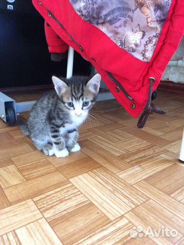 Котята  купить 5