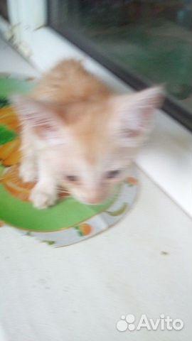Котята в добрые руки  89511582415 купить 4