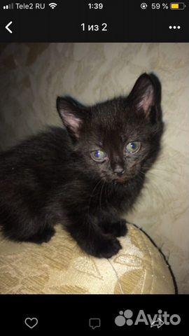 Котята в добрые руки  89000273244 купить 2