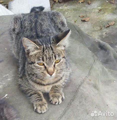 Кошка  89145598771 купить 1