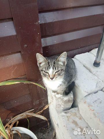 Вислоухий котенок  89237531843 купить 4