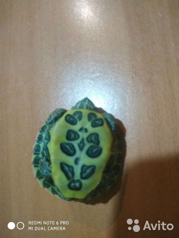 Красноухая черепаха  89898743974 купить 1