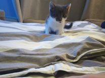 Кот котенок 1 месяц