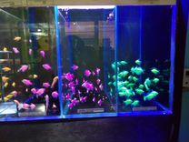 Рыбки,растения,корма,декор,аквариумы