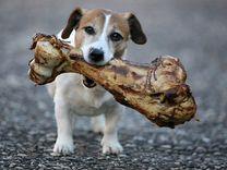 Сушеные лакомства для собак