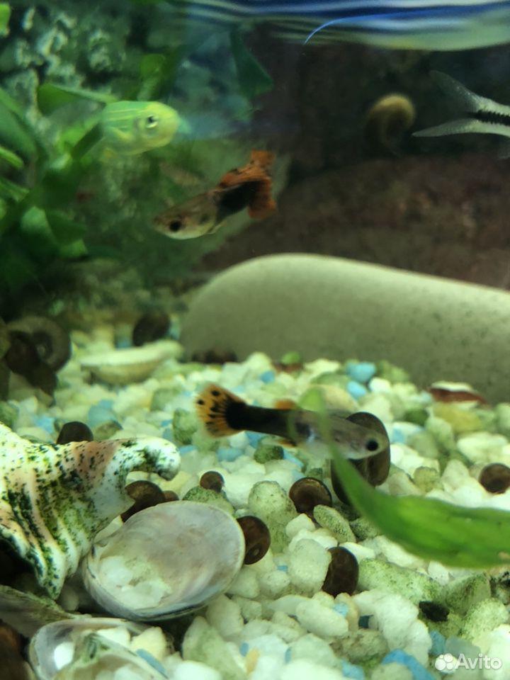 Аквариумные растения рыбы  89207067141 купить 9