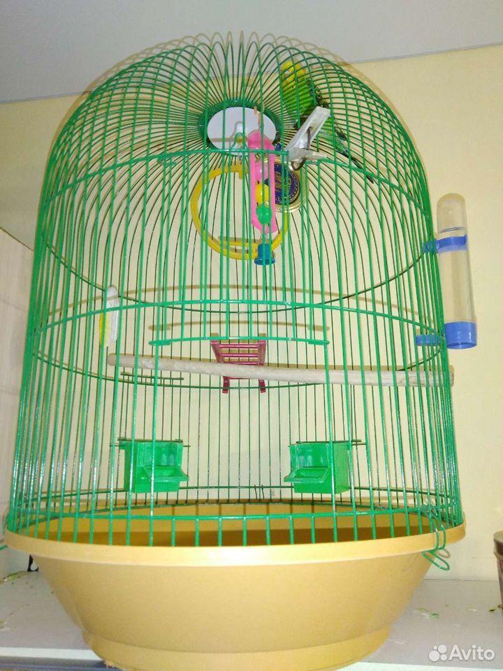 Попугай с клеткой  89237654292 купить 1