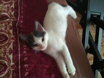Котик мальчик Тимоша