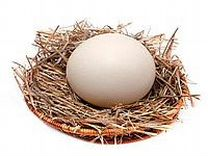 Яйцо инкубационное Брама Виандот Орпингтон