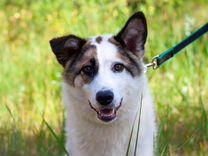 Герда-молодая собака в любящую семью