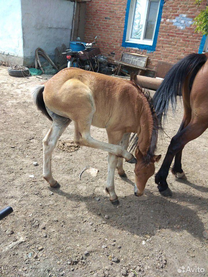 Лошадь с жеребенком  89053862728 купить 9