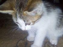Котик красавчик