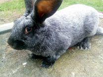 Кролики советское (полтавское) серебро и советская