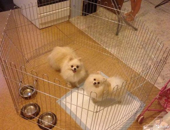 Käfig für Tiere  89954435872 kaufen 1
