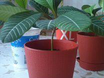 Комнатые растения