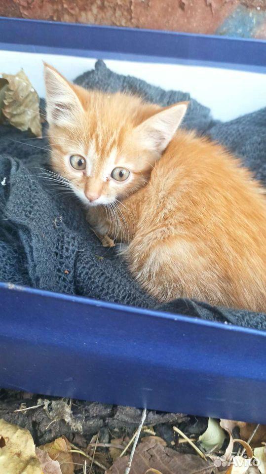 Кошка  89383050600 купить 1