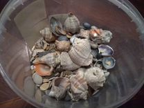 Ракушки и камушки для аквариума